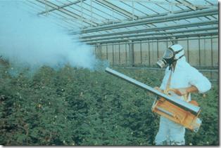 Nebulización en invernadero